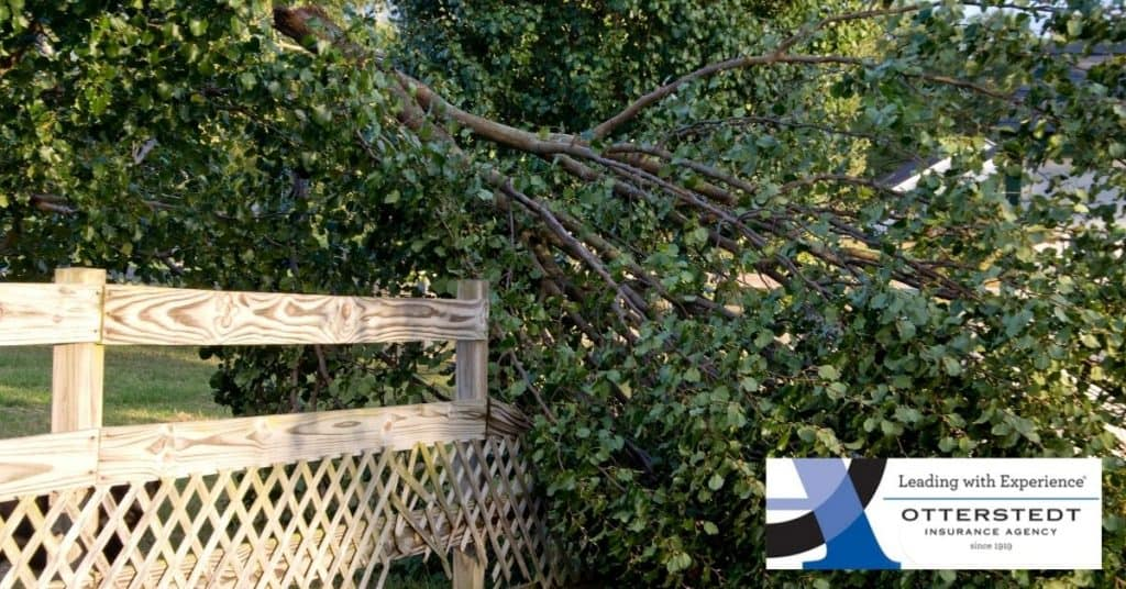If a Neighbors Tree Falls onto Your Property, What is Covered By The Neighbor's Insurance Policy?